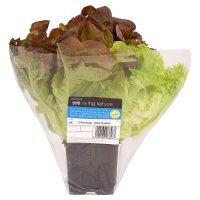 Waitrose living lettuce