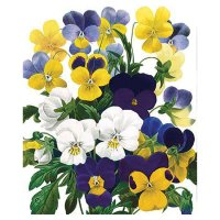NationalHistory -Flowers-Blank card