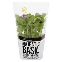 Waitrose Cooks' Ingredients British basil pot medium