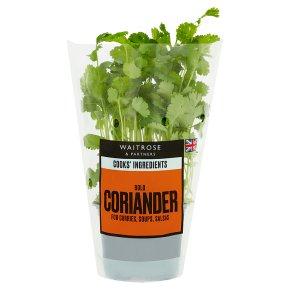 Cooks' Ingredients coriander medium pot